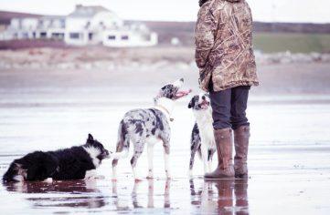 Curso socialización de cachorros