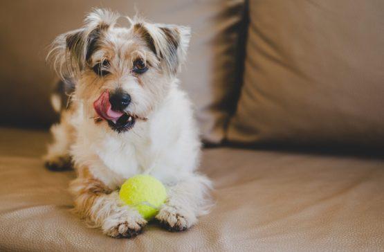 Curso de adiestrador canino a distancia online