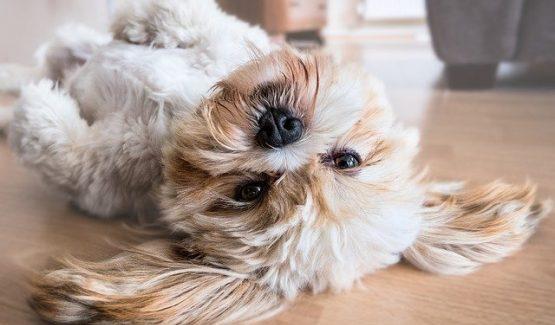 curso de adiestramiento canino online