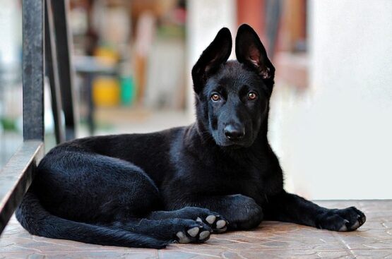 Curso para socializar a tu perro